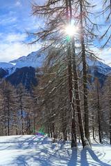 E' Arrivato! (Roveclimb) Tags: wood winter mountain alps forest inverno alpi montagna scialpinismo bosco skitouring engadina skialp zuoz bever madulain belvair engiadina pizbelvair