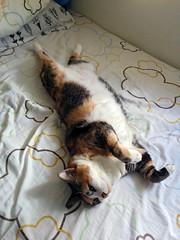 lazy life of E Meow (Steve only) Tags: cats 5 cellphone nexus e
