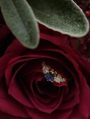 Jess & Kyle wedding 298 (Harvey Young) Tags: flowers wedding red flower detail beautiful diamonds details engagementring ring diamond rings bling weddingring saphire weddingphotography saphires weddingdetail gettingwed