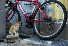 160222 - Statue (y_leong23) Tags: cat singapore dlux