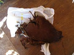 """Parc National de Viñales: les feuilles de tabac après fermentation <a style=""""margin-left:10px; font-size:0.8em;"""" href=""""http://www.flickr.com/photos/127723101@N04/25426922865/"""" target=""""_blank"""">@flickr</a>"""