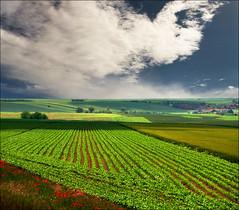 Spring fields (Katarina 2353) Tags: film nature landscape spring nikon europe serbia fields srbija katarinastefanovic katarina2353