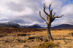 Dead Tree Glencoe Scotland (les Johnstone) Tags: winter snow tree landscape dead scotland scotish
