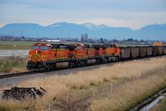 BNSF COAL (Spallumcheen) Tags: diesel delta coal bnsf locos