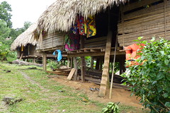 Stairs to an Embera Indian Home, Jungles of Panama (Joseph Hollick) Tags: jungle panama embera emberaindians