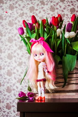Star Pinl and tulips♥
