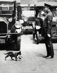 A policeman stops traffic to allow a mother cat to carry her kittens across Centre Street, New York, July 25, 1925 [1025 x 1296] #HistoryPorn #history #retro http://ift.tt/23coY2b (Histolines) Tags: street new york history cat traffic centre mother july kittens x her retro 25 timeline 1025 across carry allow 1925 policeman stops vinatage a 1296 historyporn histolines httpifttt23coy2b
