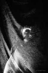 "83/365 ""Pliure dorsale"" (ophelie.poirier) Tags: shadow blackandwhite woman selfportrait abstract art texture girl monochrome strange nude photography scary photographie autoportrait artistic noiretblanc nu body ghost dos corps surrealist 365 apparition fantme abstractions artisticnude artistique observer abstrait surraliste velours project365 365days 365project 365challenge"