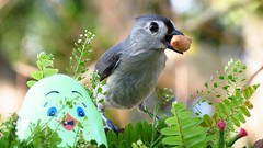 Happy Easter! Tufted titmouse. (Mayte Moya) Tags: portrait usa naturaleza cute bird nature animal us unitedstates florida wildlife eu aves ave fl animalia pjaro orlandofl eeuu airelibre happyeaster 2016 passeriformes chordata greatnature neornithes paridae felicespascuas neoaves neognathae
