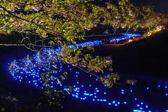 20160305-DSC_2306.jpg (d3_plus) Tags: street sea sky plant flower nature japan spring nikon scenery nightshot cloudy bloom  cherryblossom  sakura lightup nightview 28105mmf3545d nikkor    shizuoka    izu   28105   rapeblossom    28105mm  zoomlense  minamiizu    kawazuzakura    28105mmf3545 d700 281053545  nikond700 shimokamo aiafzoomnikkor28105mmf3545d nightcherryblossom 28105mmf3545af    southcherryblossomandrapeblossomfestival aiafnikkor28105mmf3545d shootingstarsandsakurainnight sakurainnight
