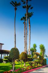 Marina del Rey, California (scaturchio) Tags: ocean california usa lighthouse marina boats la losangeles palmtree marinadelrey