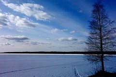 Path (sakarip) Tags: sky lake snow tree ice clouds finland skyscape landscape path april birch lakescape kainuu hyrynsalmi seitenjrvi sakarip