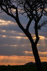 In Szene gesetzt (thunderbird-72) Tags: silhouette abend frankreich sonnenuntergang fr baum spaziergang abendrot abendstimmung abendlicht launstroff steineandergrenze alsacechampagneardennelorraine alsacechampagneardennelorrain