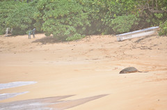 HWI_1069 (Ikuhito) Tags: ocean blue cloud beach hawaii oahu turtle wave northshore honu