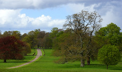 The road less travelled... (SteveJM2009) Tags: road uk trees green woodland countryside spring estate path dorset april stevemaskell kingstonlacy 2016 naturethroughthelens