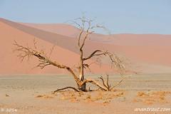 Namibia 3_2861_edited-1 (arx7) Tags: africa trekking sand desert offroad wildlife dunes scenic dry 4wd adventure oasis zebra antelope destination pan savannah sesriemcanyon sesriem namibia acacia arid offroading oryx springbok solitaire windhoek petrifiedforest sossusvlei swakopmund walvisbay bigdaddy anant herero deadvlei vlei skeletoncoast damara tropicofcapricorn weaverbird dune45 bigmama bigmomma bantu namibdesert naukluft subsaharan tsauchab namibnaukluft reddunes raut anantrautorg anantraut republicofnamibia republiknamibia anantrautcom republiekvannamibie
