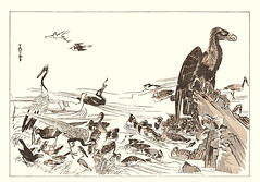 Plover, red-crowned crane, domestic goose, cormorant, green pheasant, silver pheasant, large-billed crow, Japanese waxwing, meadow bunting, scaup duck, white-fronted goose, Baikal teal, smew, green-winged teal, red-breasted merganser and other birds (Japanese Flower and Bird Art) Tags: green bird art japan silver japanese book duck little pheasant crane teal picture meadow goose domestic cormorant crow formosa japonica waxwing anas anser plover aythya grebe scaup woodblock tanaka baikal grus redbreasted bunting merganser versicolor bombycilla maruyama shijo anatidae smew emberizidae whitefronted corvus corvidae phasianidae phalacrocorax emberiza tachybaptus ruficollis cygnoides albifrons crecca mergus serrator phasianus greenwinged nagasawa phalacrocoracidae charadrius gruidae charadriidae podicipedidae redcrowned rosetsu macrorhynchos cioides largebilled mergellus bombycillidae japonensis albellus moichi lophura nycthemera readercollection