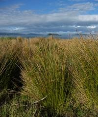 Grassy (Fraser P) Tags: sea newzealand beach weather cafe harbour wellington petone lowerhutt
