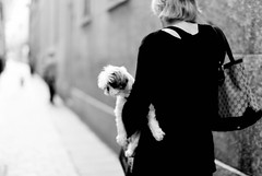 dog walk (amy spada) Tags: bw woman dog master mansbestfriend carry