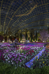 Tulipmania 2016, Gardens by the Bay, Flower Dome (gintks) Tags: flower singapore tulips colourful tulipmania exploresingapore gardensbythebay singaporetourismboard gbtb yoursingapore gardenbythebay gintaygintks