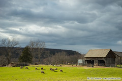 Yankee Farmlands  62 (J. G. Coleman Photography) Tags: sky cloud storm building clouds barn rural forest countryside spring woods woodlands sheep farm connecticut country newengland farmland hills pasture pastoral livestock farmanimals barnyard springtime bucolic ovisaries domesticsheep pastureland nutmegstate southernnewengland oaries runinshed domesticatedsheep runinbarn