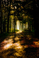 Light the way (briancribbin) Tags: trees ireland forest kildare