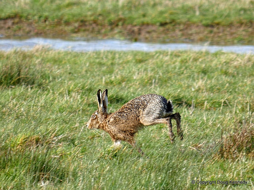 Hare 2 160328