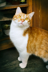 Cat opened the cupboard and pleased with himself (lera_abrakadabra) Tags: cats pets colorful rustic cutecats catface gingercat shabby animalphotography catlovers petslovers