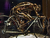 He Rode That Bike To Death (raymondclarkeimages) Tags: raymondclarkeimages 8one8studios usa bike bicycle bones skeleton cybershot sony exhibit museum body bodyworlds plastination gunthervonhagens rci pictureof picof photography photographer imageof flickr google yahoo