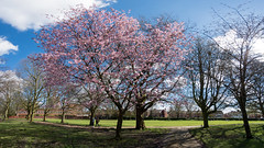Cherry (kh1234567890) Tags: pentax fisheye 8mm samyang8mmf35 k5ii