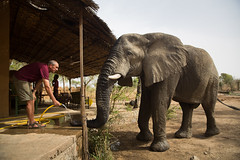 Elephants can forgive-Zakouma (jeromestarkey) Tags: africa feeding chad drinking elephants verandah tchad zakouma africanparks rianlabuschagne