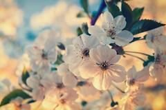 spring!  (Still.Loony) Tags: canoneos400d