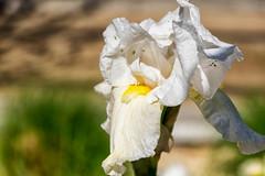 (ad_n61) Tags: espaa flores del de san flor abril rosa feria libro super zaragoza jorge aragon fujifilm 23 naranja fujinon wr ebc xf 2016 ois 13556 xt1 18135mm