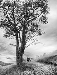Bueno Brando - Minas Gerais (Edinei Matos) Tags: old trip travel brazil sky blackandwhite bw tree minasgerais nature monochrome grass contrast way outside climb ancient tour outdoor path walk sopaulo branches sony mg mount trunk tall wandering buenobrando