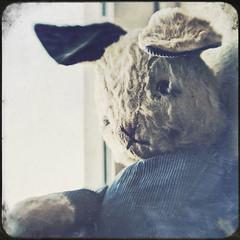 window waiting (jssteak) Tags: old bunny lensbaby canon vintage square stuffedanimal distressed mrbunny t1i