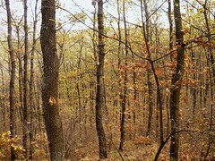 memories. (eunoia ecoas) Tags: wood autumn trees orange mountains nature beautiful beauty leaves forest woodland dark landscape soft solitude peaceful poetic ethereal nostalgic dreamy autumnal melancholic eunoia ecoas
