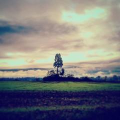 #piemonte_super_pic #paesedifiaba #volgopiemonte #autumn #colors_hub #landscape #landscape_captures #roero #langheroero #ic_landscapes #world_nature #world_capture_nature #pinosolitario #nikon #nikond3200 #loves_piemonte #ig_cuneo #selfie_filterra #igers_ (maglia76) Tags: square nashville squareformat iphoneography instagramapp uploaded:by=instagram