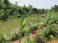 IMG_6986.jpg (Kuruman) Tags: sylhet bangladesh srimangal