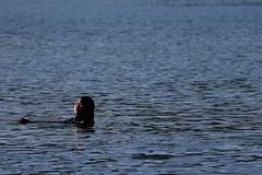 Oriental Bay (whitebear100) Tags: newzealand water waterfront nz wellington northisland orientalbay