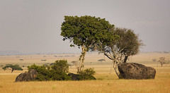 Serengeti Rocks 01 (lbergman100) Tags: africa grass tanzania safari boulders plains serengeti grassland savanna kopje