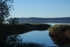 Kleiner Jasmunder Boden (nudelbach) Tags: blue sea sky green reed water reeds meer wasser himmel grn cloudless blau landschaft schilf wolkenlos langscape