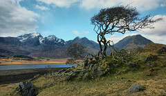 Loch Slapin Tree and Bla Bheinn (Andy Watson1) Tags: uk trip travel blue sky mountain holiday snow tree skye grass clouds canon landscape march scotland countryside spring highlands scenery view isleofskye britain united great north scenic scottish sigma kingdom snowcapped weathered british loch bla isle hebrides blabheinn bheinn slapin 2013 450d