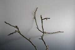 February 10, 2016 (THE ZEN DIARY by David Gabriel Fischer) Tags: wood light shadow david gabriel photography photo diary journal buddhism minimal zen twig mindfulness meditation fischer zazen