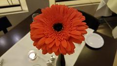 Flower (grinnin1110) Tags: flower night germany de deutschland restaurant hotel flora europe blossom hilton indoor bloom mainz rheinlandpfalz weinstube rhinelandpalatinate