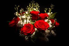 Happy Valentine's Day (rlgidbiz1) Tags: rose flash strobe happyvalentinesday