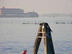 DSCN3345 (LAMPO999) Tags: laguna venezia lido cornacchia