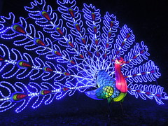 Magical Lantern Festival, Chiswick House, Feb 2016 (roger.w800) Tags: show china new london night lights dragon chinese illuminations entertainment lightshow afterdark westlondon chiswick chiswickhouse englishheritage lightatnight yearyear colourcoloured londonfestival lightscoloured lanternschinese monkeylight chiswickhouseandgardens lanternsanimalsdragonchinese magicallanternsfestival chineselanternssilk chgt