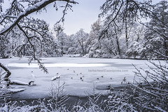silent pond (berberbeard) Tags: schnee winter germany deutschland photography fotografie linden hannover sonw itsnotatrick berberbeard berberbeardwordpresscom ilce7m2
