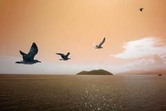 on our way (marianthipostcard) Tags: trip sea seagulls ferry way island boat flying horizon greece birdlife thasos