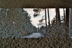 (AirSonka) Tags: trees winter snow film silhouette analog 35mm pentax doubleexposure structures structure multipleexposure silence analogue pentaxmz7 doubleexposed pelcula filmphotography pellicule agfavista200 mehrfachbelichtung